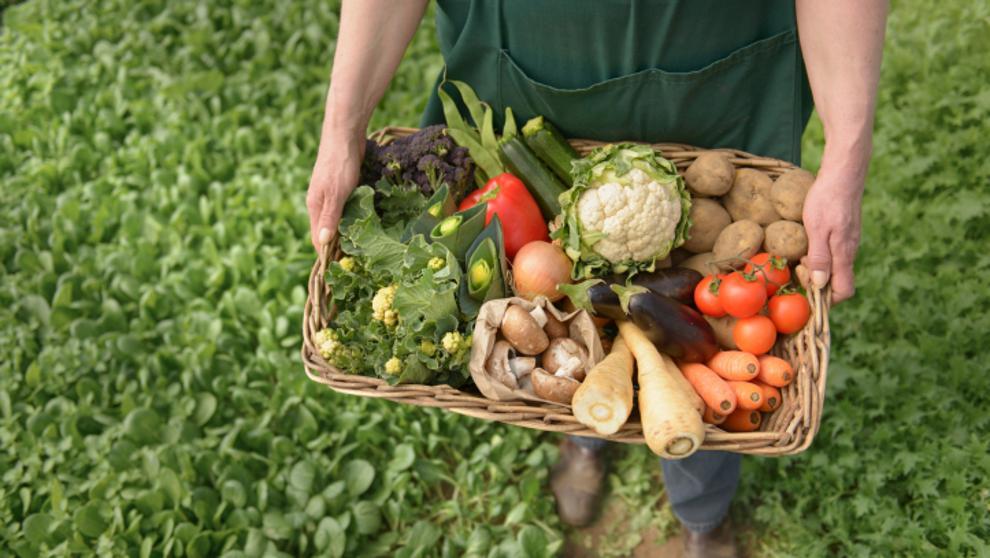 negocios más rentables - agricultura ecológica y reciclaje